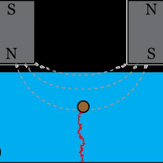 Cartoon of magnetic tweezer assay of polymer elasticity